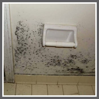 bathroom-mold-1