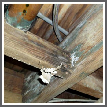 mold on trusses