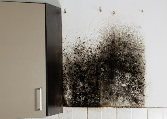 Rethink Removing Mold on Your Own